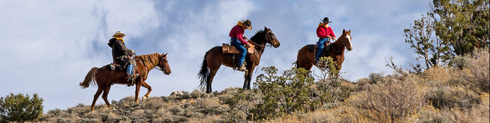 Three men on brown horses walk up a sagebrush covered ridge.