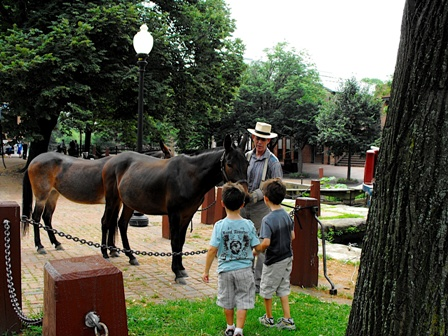 a ranger shows the mules to two boys at the Georgetown C&O Canal Visitor Center