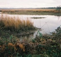 Marsh in Southern Maryland