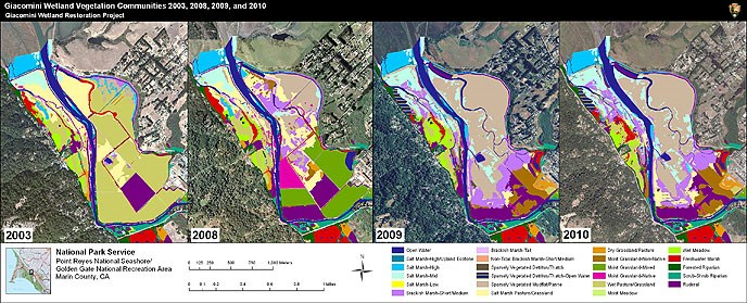 Figure M1. Vegetation Communties on the Giacomini Wetlands - 2003, 2008, 2009, and 2010. Click this image to download a 1.1 MB PDF of these maps.