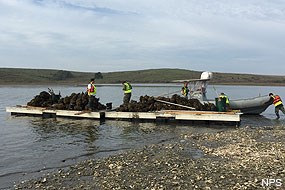 Barges removing oysters left in Drakes Estero.