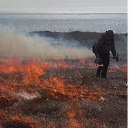Prescribed fire at Drakes Beach