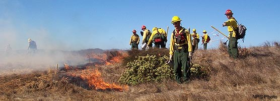 Fire fighters using drip torches to ignite a prescribed fire near Drakes Beach in 2004.