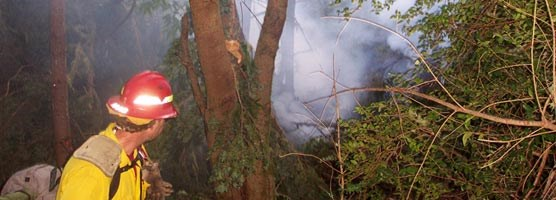 Smoke behind trees as firefighter responds to a lightning-ignited wildfire