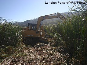 Construction of first adaptive restoration element in Olema Marsh in October 2008.