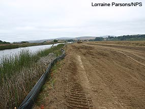 Small berm left after removal of most of the East Pasture Levee to keep out tides until the end of construction.