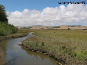 Undiked marsh directly north of Giacomini Ranch West Pasture.