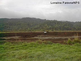 Manure Disposal Pasture after excavation of nutrient-rich soils.