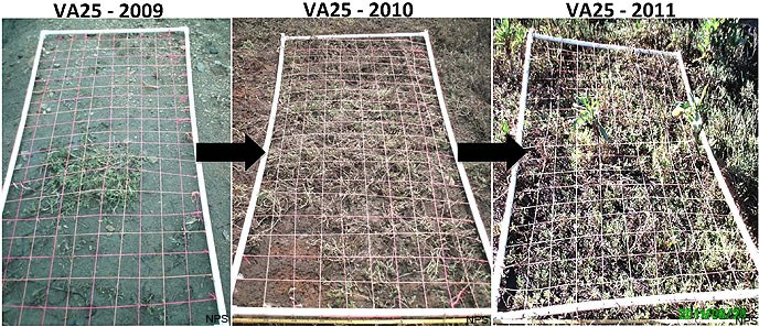Giacomini Wetland Restoration Project - Restoration: Vegetation Monitoring: Vegetation Assembly: Figure A3. The transformation of one plot, VA25, from 2009 to 2011, as it was colonized by plants.