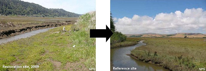 Figure A8. Two pictures comparing the Restoration Project Area in 2009 (on the left) and the desired future condition as represented by the Reference Site (on the right).