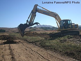 Salvaged pickleweed and marsh soils being placed on top of filled borrow ditch.