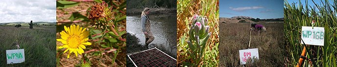 Banner with images of vegetation transects, wetlands flowers, and researchers in the Giacomini Wetlands.