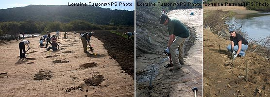Members of the local community and general public plant along Lagunitas Creek in the former riprap area (left). Among those volunteering that Saturday were Mark Cederborg, the manager for Hanford ARC (center), and Sally Bolger, the project manager for PRNSA (right). They are installing willow sprigs.