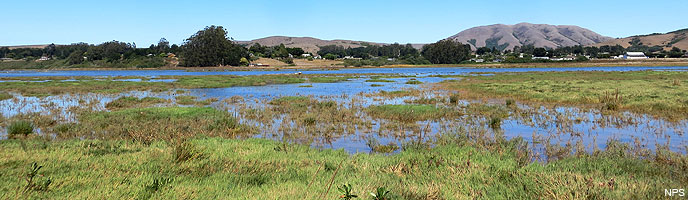 A view looking east across the Giacomini Wetlands toward Point Reyes Station and Black Mountain on September 9, 2013.