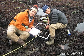 Two high school students performing intertidal monitoring at Duxbury Reef.