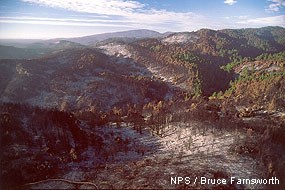 Valley and hills within the area of the 1995 Vision Fire.