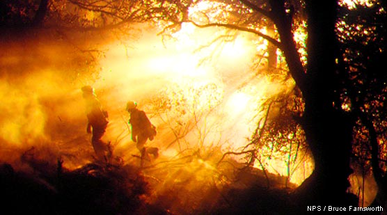 Firefighters walking through smoke-filled forest during the 1995 Vision Fire. Firefighters on the left walking toward the left. Sunlight streaming through the smoke from upper right.