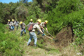YCC crew members clearing brush along a section of Muddy Hollow Road Trail.