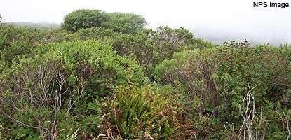 various shrubs in the coastal scrub habitat
