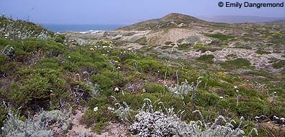 diverse coastal dune habitat at Abbotts Lagoon
