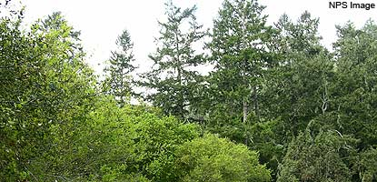 Douglas-fir and mixed evergreen forest