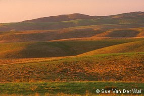 Sunrise over Pastoral Zone © Sue Van Der Wal