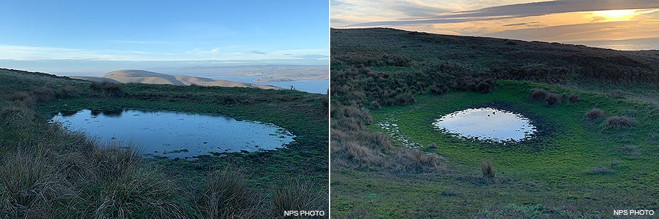 Two side-by-side photos of two small ponds surrounded by low-growing green vegetation.
