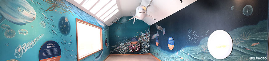 The interior of the Ocean Exploration Center. A three-dimensional model a white shark is suspended from the ceiling and murals depicting life below the surface of the ocean are painted on the walls.