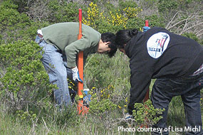 Volunteers removing scotch broom. Photo courtesy of Lisa Michl