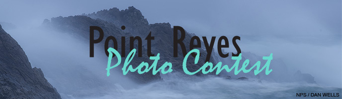 Banner for Anniversary photo contest