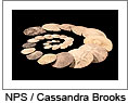 "Thumbnail for The Natural Laboratory's ""Ocean Acidification: Where will all the seashells go?"" presentation- May 12, 2011. Image is of a spiral of sand dollars on a black background. Image by Cassandra Brooks. Click on image to download the podcast."