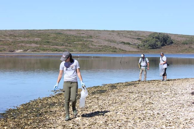 Three volunteers clean up litter along the Drakes Estero shoreline