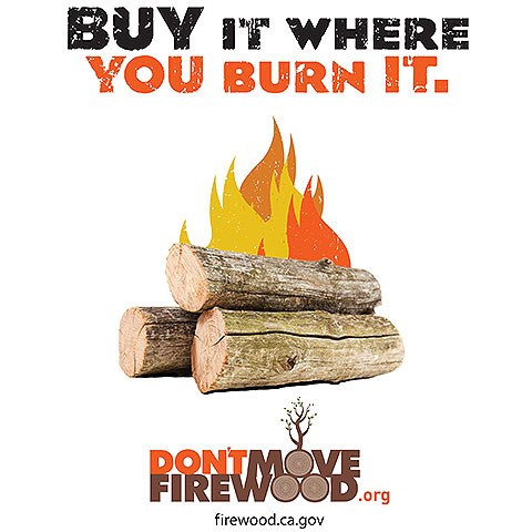 "Cartoon of burning wood with the words ""Buy It Where You Burn It"" above and ""don'tmovefirewood.org"" below."