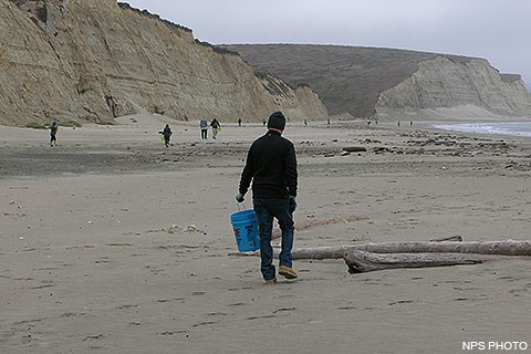 Fifteen people widely scattered across a beach carrying buckets search for marine debris. Tan bluffs rise from the beach on the left, waves wash ashore in the center far right.