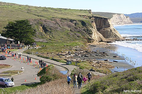 In the foreground, seven individuals descend a path that leads from a bluff-top overlook to a beach-side parking lot. On the left, in the parking lot, are dozens of visitors looking at elephant seals that are laying on the beach on the right.