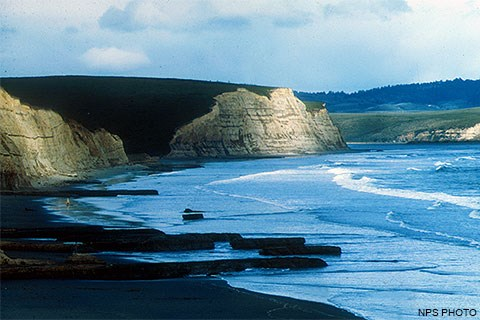 Sun-dappled, light-tan-colored cliffs on the left above a mostly sandy beach with waves washing ashore from the right. [Click on the image to go to the Beaches of Point Reyes page.]