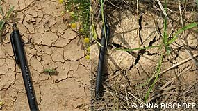 Visible effects of increased carbon in soil (before a restoration project increased organic matter content in the soil shown on the left and after shown on the right). © Anna Bischoff.