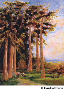 Giant Sequoias by Joan Hoffmann