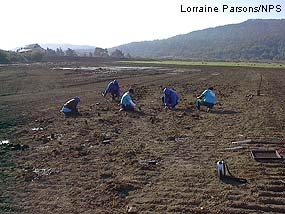 Giacomini Wetland volunteers.