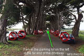 Automobiles parked on the roots of Monterey cypress trees.