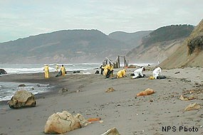 Contractors on RCA Beach cleaning up bunker fuel from Cosco Busan oil spill.
