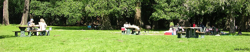 Picnickers eating lunch at picnic tables in a meadow near some trees.