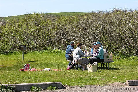 Picnickers eating lunch at a picnic table with willows in the background.