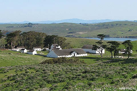 A historic dairy ranch composed of many white-painted buildings surrounded by green grass and a few trees.