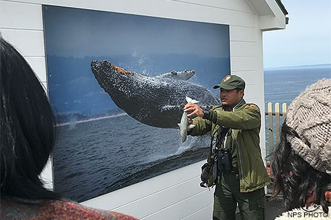 A male ranger standing beside a large photo of a breaching humpback whale while talking with visitors about how gray whales dive.