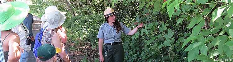 A female ranger gesturing toward some red berries while talking with visitors on a ranger-led program.