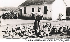 "Historic black and white photograph of ""Ella feeding the chickens"" at the E Ranch on the Point Reyes Peninsula. Clara Marshall Collection, NPS."