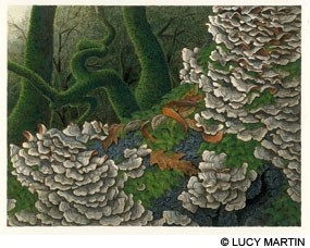 "Painting: ""Turkey Tails with Oak Trees"" © Lucy Martin 2016."