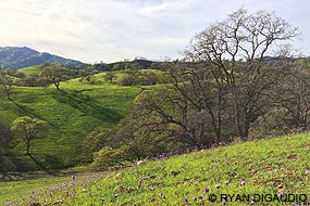 Rangelands in Yolo County. © Ryan DiGaudio.