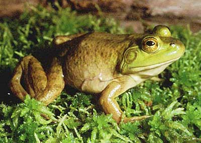 Bullfrog Presidio Of San Francisco U S National Park